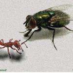 Kisah Lalat dan Semut