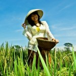 Aplikasi Petani 8villages, Saatnya Petani Indonesia Menggunakan Media Sosial