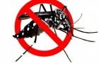 Atraktan, Menilik Peluang Bisnis Pembasmi Nyamuk Modern