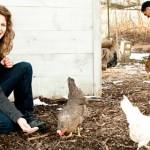 4 Ciri Seorang Chicken Entrepreneur dan Karakteristiknya