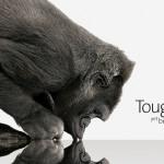 Gorilla Glass ~ Mengenal Teknologi Screen Protector Terbaik Saat Ini
