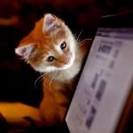 7 Tips Unik Bikin Facebook-an Makin Asyik