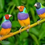 Tips Memulai Bisnis Penangkaran Burung Kicau