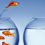 Menangkan Persaingan Pasar! 3 Langkah Sukses Terapkan Blue Ocean Strategy