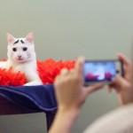 Tak Mau Kalah dengan Manusia, 5 Hewan Ini Tenar DenganFollower Bejibun di Instagram