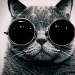 Ubah Kucing Anda Jadi Internet Star Dengan Cara Unik Berikut Ini