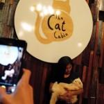 The Cat Cabin ~ Kafe Kucing Terbaru di Jakarta dengan Konsep Homey