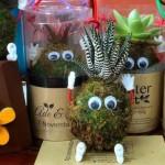 Planter Craft ~ Bisnis Boneka Lumut yang Menguntungkan dari Kota Bandung
