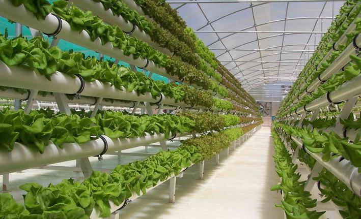 Budidaya Sayuran Organik dengan Sistem Hidroponik