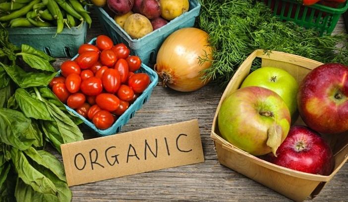 Usaha Budidaya Sayuran Organik