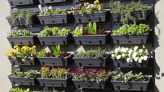 Budidaya Sayuran Organik dengan Vertical Garden