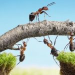 5 Cara Meningkatkan Kekompakan Dalam Organisasi dan Tim Kerja