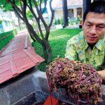 Wow Usaha Budidaya Ternak Cacing Tanah Bisa Hasilkan Ratusan Juta Rupiah